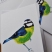 Blue tit personalised stationery 3