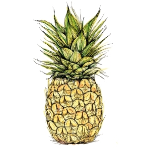 Pineapple, watercolour and ink. Private commission, Limited Edition print. (c) Ella Johnston